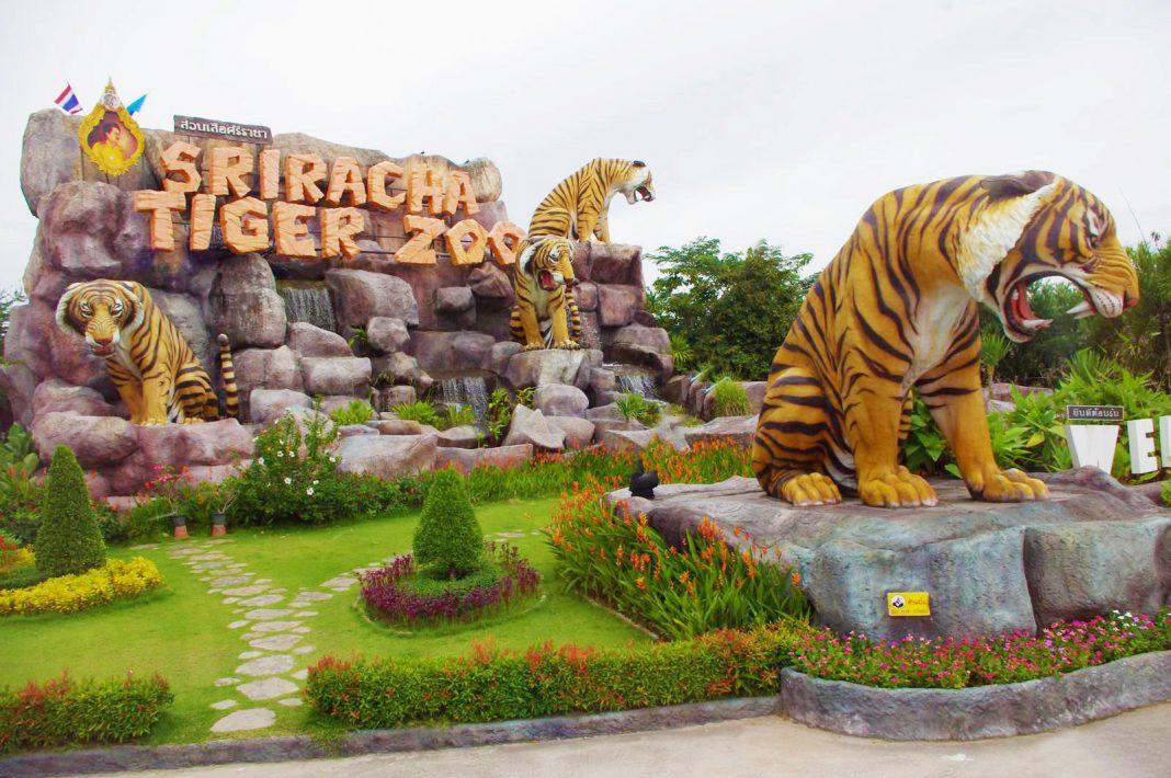 Tour du lich Thai Lan Hoang Viet Travel - Công viên Sriracha Tiger Zoo